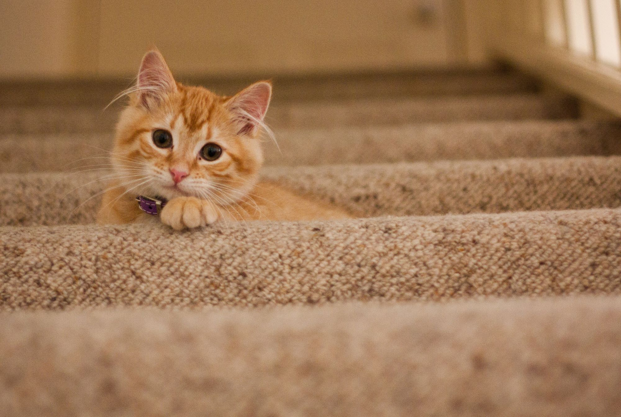 Pet-Friendly Renting: Why Landlords Should Consider All Creatures (Moderately) Great and Small
