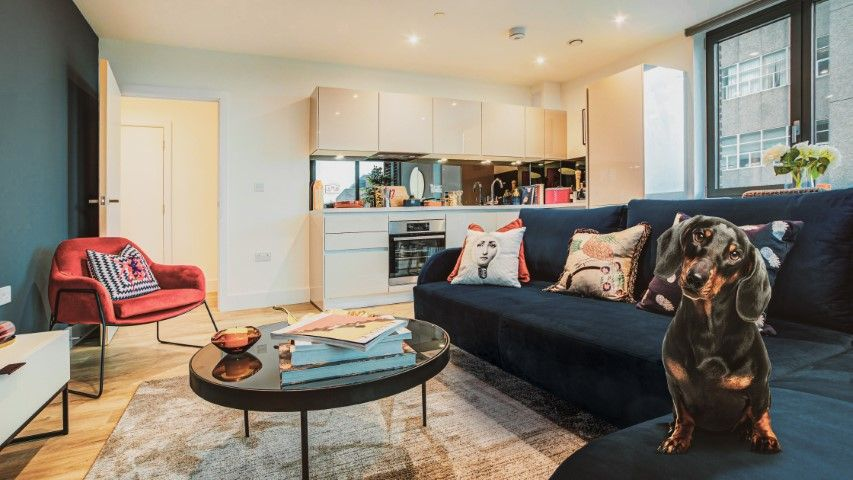 New pet-friendly apartments to rent in London